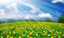 #Vapenation Spring